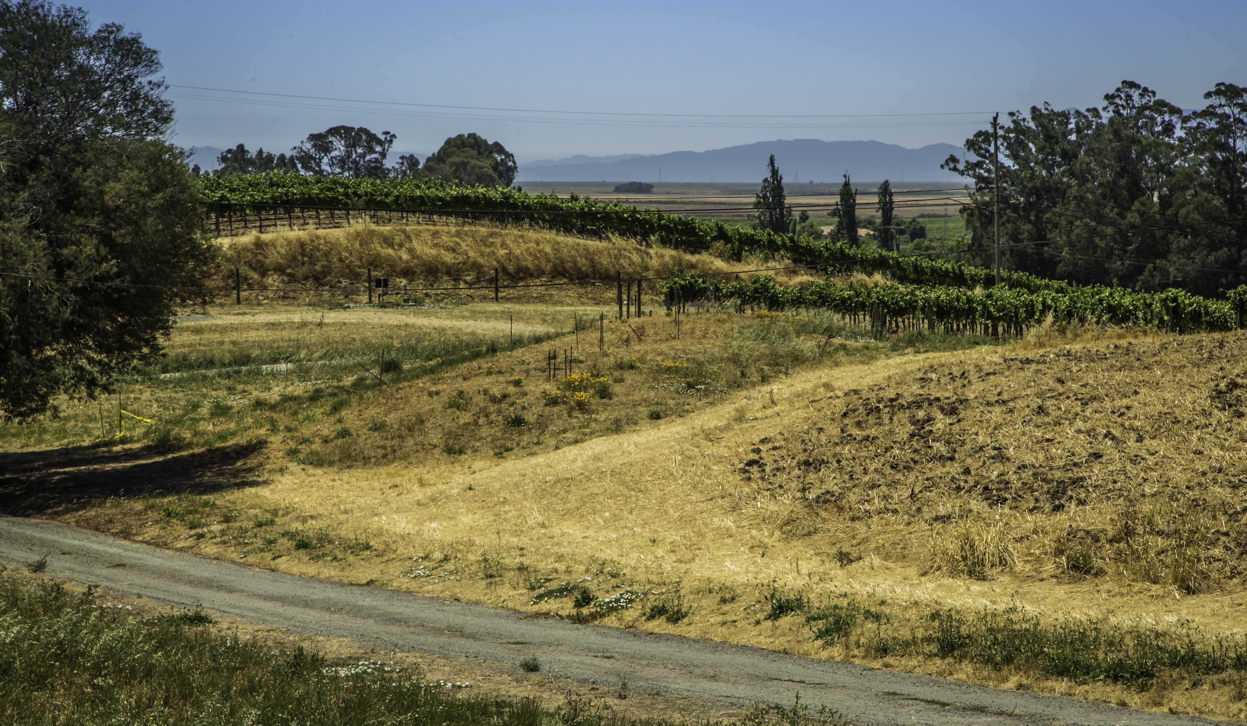 Liana Estates, Napa Valley