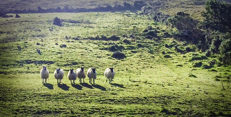Kell's Sheep Centre, Killarney, Ireland