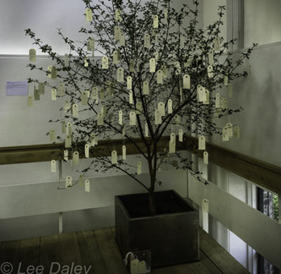 Imagine Tree, Copenhagen, Iceland, Oko Ono
