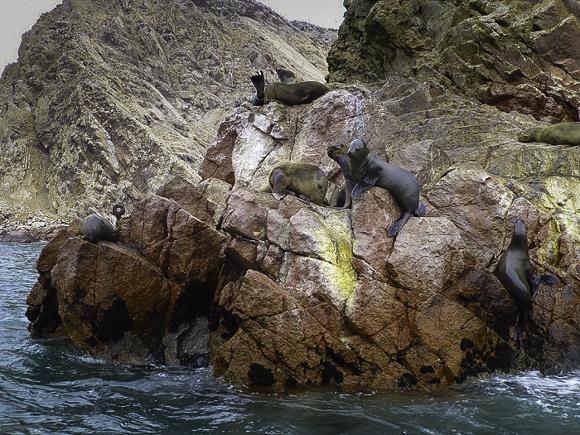 """Coastal Peru, Islas Ballestas, """"Baby Galapagos.""""Bahía Paracas, Peru"""
