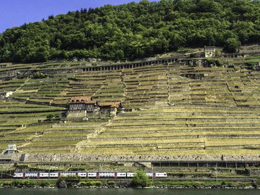 Vineyards rise from Lac Leman, Switzerland