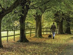 A walk in the woods, Slide Island, Ballinakill Island, Waterford Castle, Waterford City, Ireland