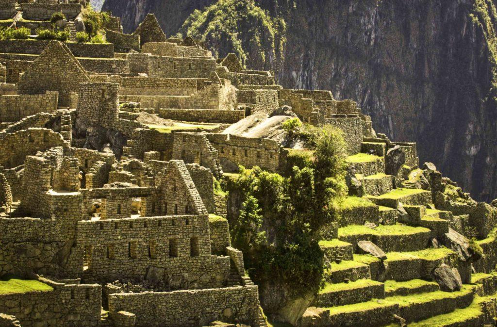 Guanacos ofMachu Picchu, Cusco region, Peru