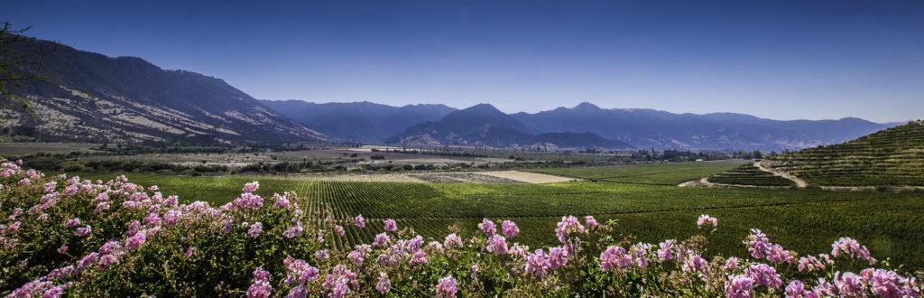 Viña Santa Cruz, Chile's wine-making, Colchagua Valley, Chile
