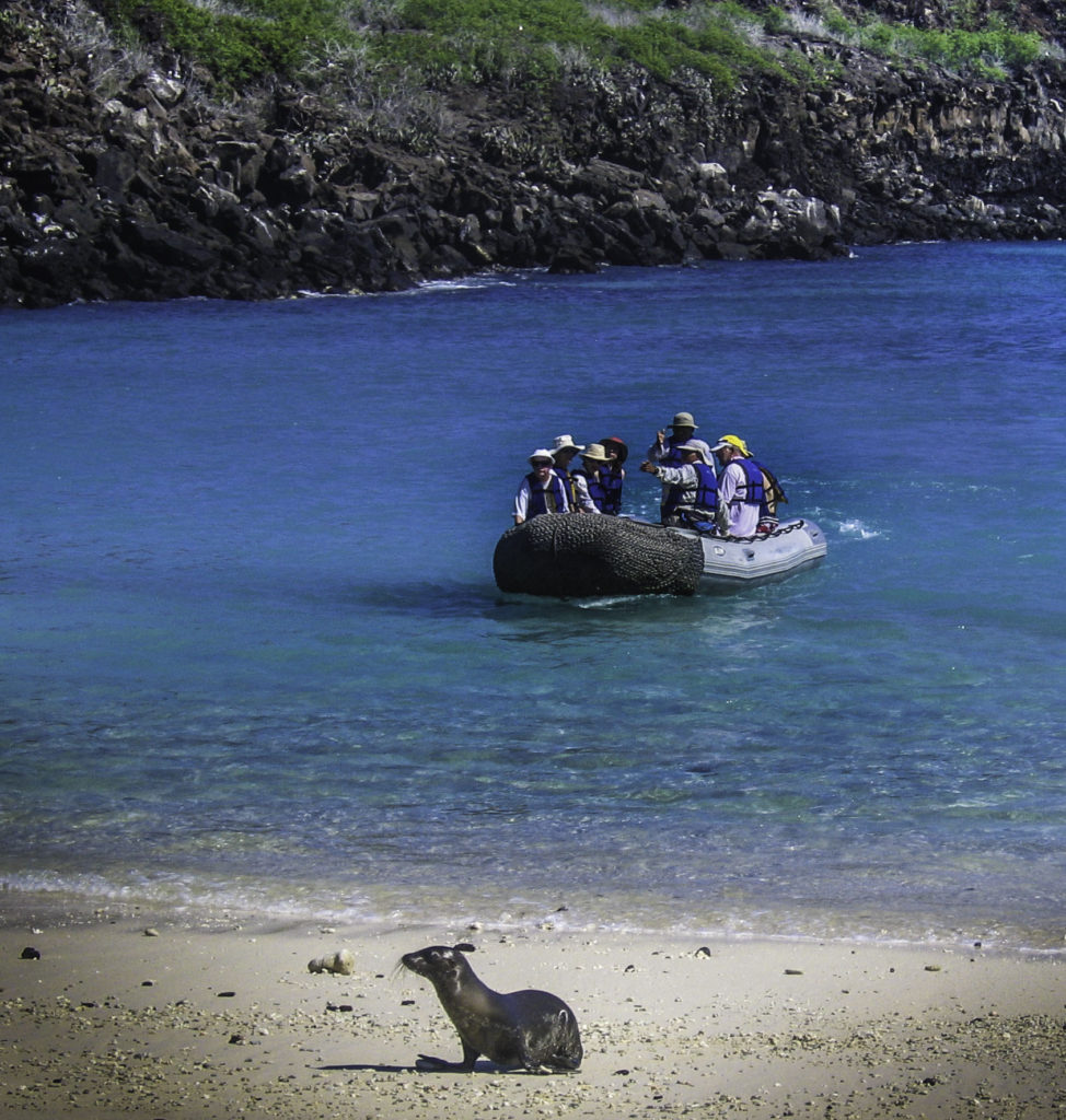 Lone sea lion welcoming a panga bringing passengers from ship to shore, Galapagos Islands, Ecuador