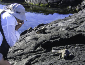 Up close and personal with an iguana, Galapagos Islands, Ecuador