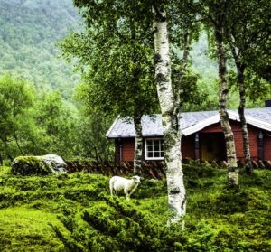 Hurtigen Midnatsol cruise through pastoral Norway