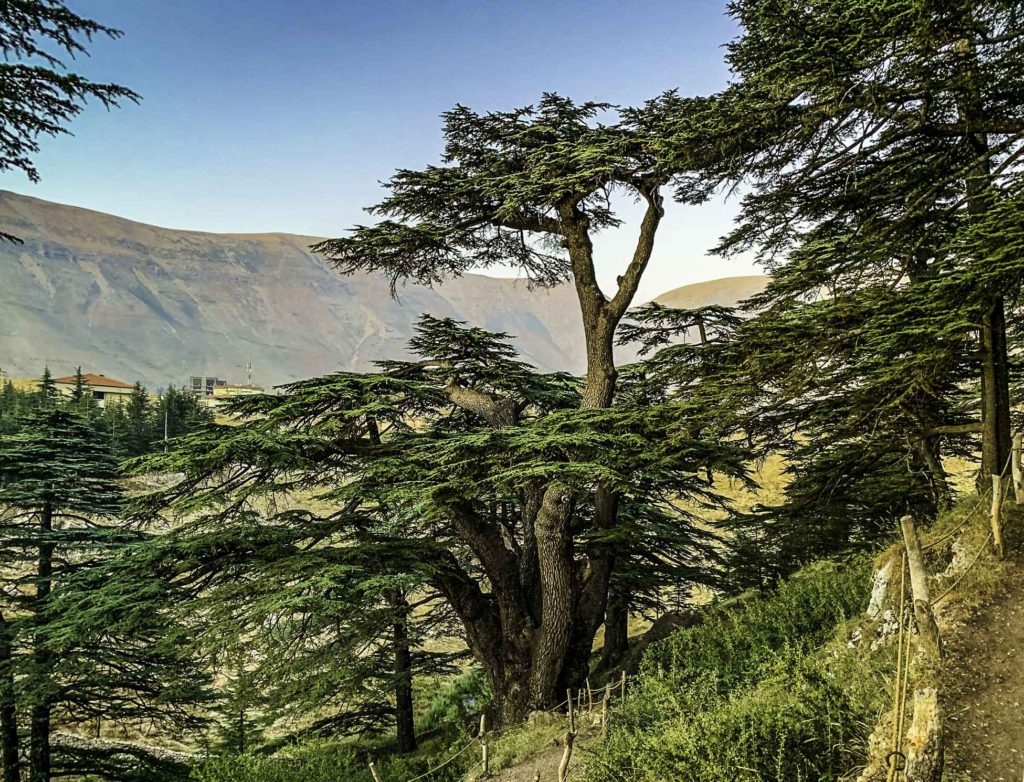 Cedars of God. The deforested Mount Lebanon Range in the background