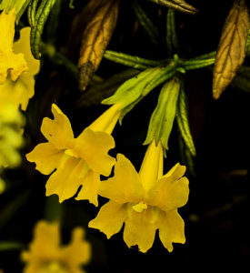 Wildflowers, Battery Townsley, Fort Cronkhite, Marin Headlands, Golden Gate National Recreation Area, San Francisco, California
