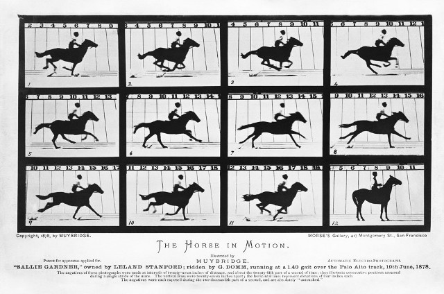 The Horse in Motion by Eadweard Muybridge 1878