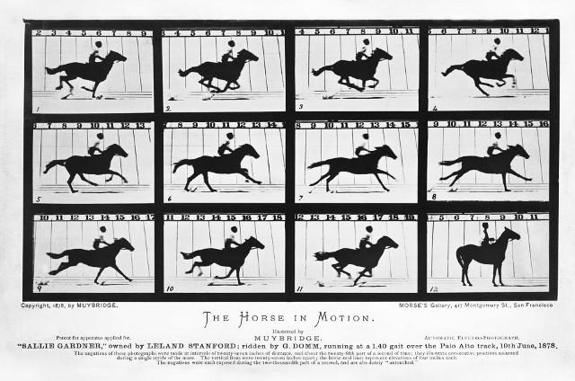 The Horse in Motion by Eadweard Muybridge 1878