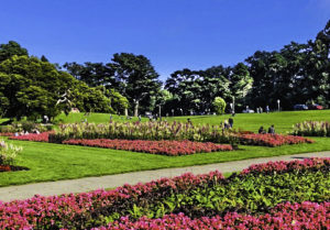 Golden Gate Park, Spring on Display, San Francisco, California