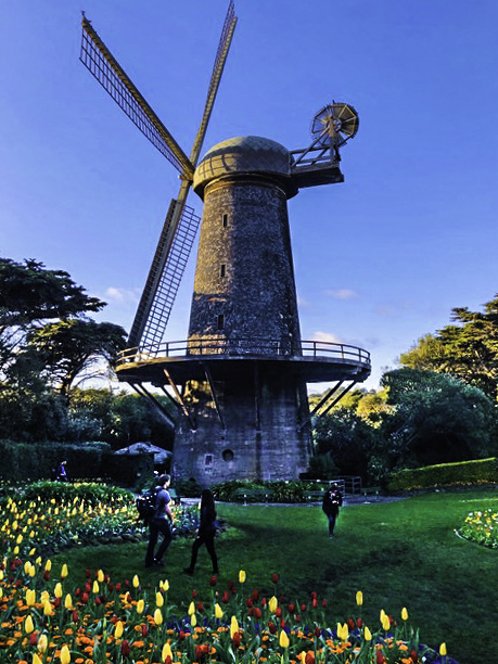 Golden Gate Park, Queen Wilhelmina tulip garden, San Francisco, California