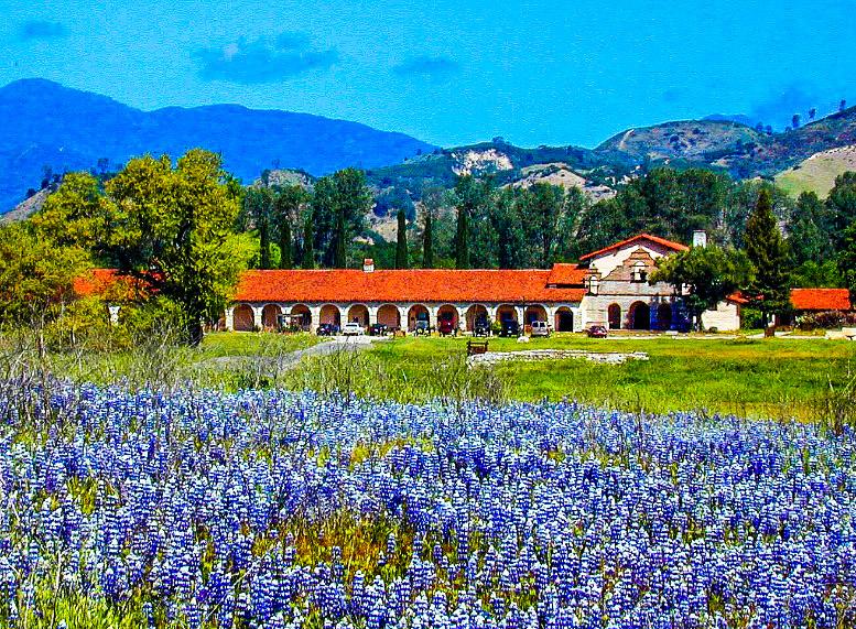 Sky lupins at Mission San Antonio de Padua, Fort Hunter Liggett, Monterey County, California