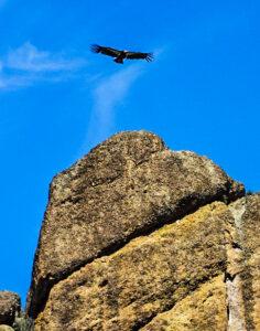 Condor soaring above High Peaks, The Pinnacles National Park, California