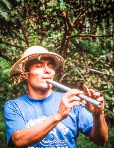 Rainforest Symphony in the Amazon Jungle, Brazil