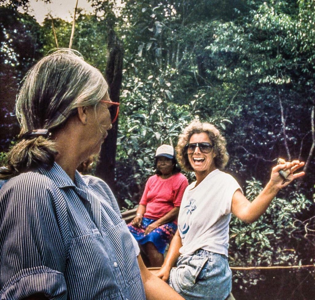Rainforest Symphony, Amazon, Brazil
