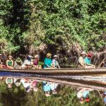 Rainforest Symphony in the Amazon jungle, Peru