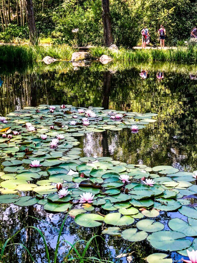Botanical Garden, Steamboat Springs, Colorado
